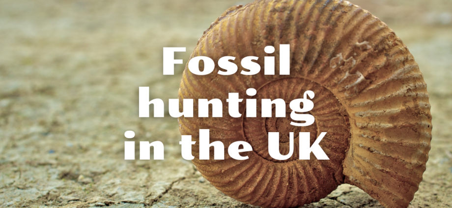 Finding fossils in the UK
