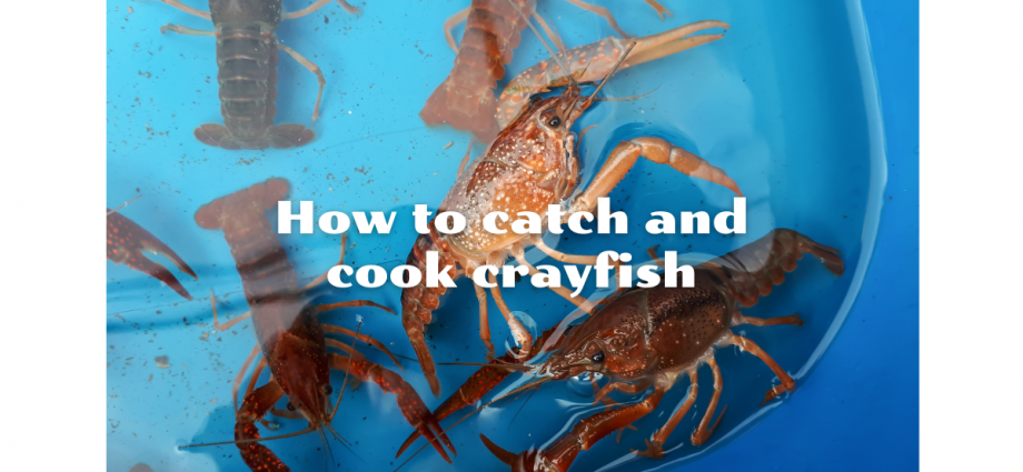 How to catch and cook crayfish