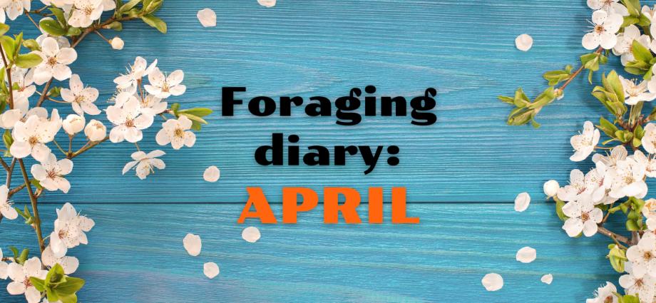 Foraging diary APRIL
