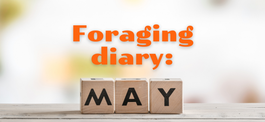 Foraging diary MAY two deck